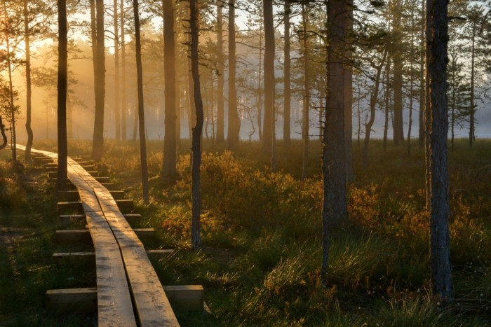 Nature, with bugs or without or busting stress, the Nordic way